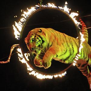 Цирки Светлого Яра