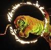 Цирки в Светлом Яре